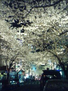 070329_sakura.jpg